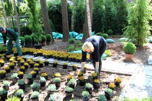 Ważną sprawą na początku podczas realizacji ogrodu jest przygotowanie terenu oraz wybór zdrowych i dobrych jakościowo roślin
