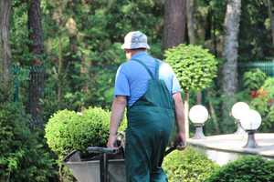 Naszym ogrodem może się opiekować wykwalifikowany ogrodnik albo robimy to sami