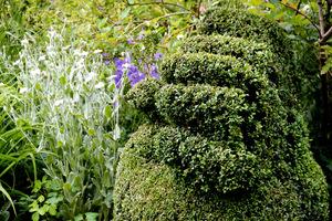 Cięcie roślin to coś, czego wielu właścicieli ogrodów się boi. Wyjątkowo trudne jest cięcie tak skomplikowanych topiarów