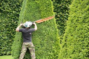 Cięcie specjalistycznym sprzętem przez wykwalifikowanego ogrodnika kosztuje, ale jakość tej pracy jest idealna