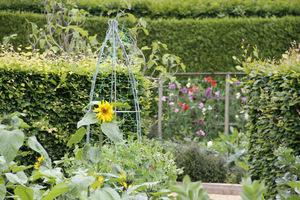 Obeliski i podpory naturalne w ogrodzie warzywnym