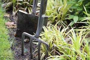Tutaj wiele zależy od systematyczności i dokładności w wyrywaniu chwastów, koniecznie z korzeniami