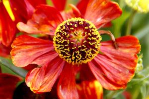 Dzielżany kwitną w barwach jesieni: pomarańczu, rdzawej czerwieni, żółci i ich odcieniach