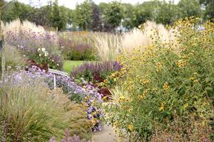 Ogród bylinowy z przewagą traw. Astry stanowią tutaj ważny element kompozycji