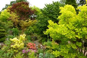Kolekcja różnobarwnych klonów w prywatnym ogrodzie. Na pierwszym planie po prawej żółty perukowiec