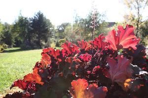 Jesień w purpurze
