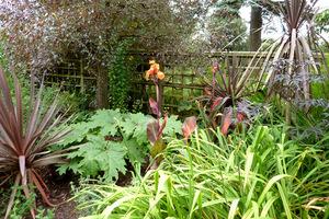 Kanny z liliowcami, rabarbarem (Rheum) i czarnym bzem. W donicach pióropusze kordylin
