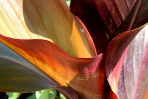 Młode liście zwinięte w rurkę