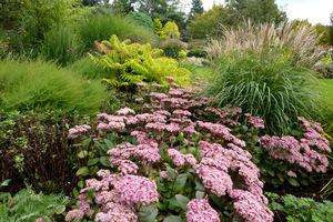 Przykład doskonałego zastosowania rozchodników (Bressingham Gardens)