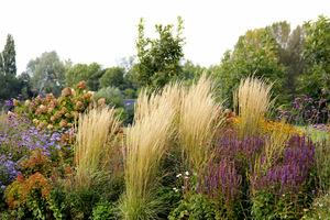 Beżowy trzcinnik i kolorowe kwiaty jesieni