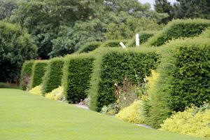 W każdej kwaterze oddzielonej cisem znajduje się ogródek w innym stylu bądź kolorze