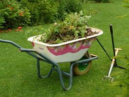 Przekwitnięte kwiaty, ścięta trawa, chwasty - to wszystko nadaje się na kompost