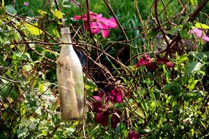 DMZ Forbidden Garden