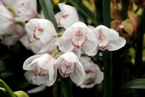 Kwiaty bladoróżowe wyglądają niezwykle delikatnie