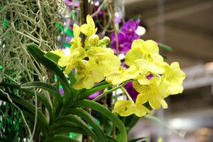 Te rośliny zachwycą każdego nie tylko swoją urodą, ale także ze względu na sposób uprawy, jako wiszące w powietrzu rośliny bez ziemi