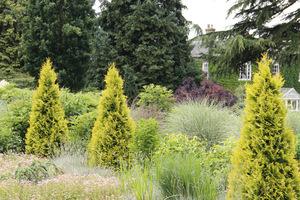 Kolumnowe, stożkowe lub cylindryczne iglaki sadzimy jako punkty przyciągające uwagę ciekawym pokrojem lub kolorem