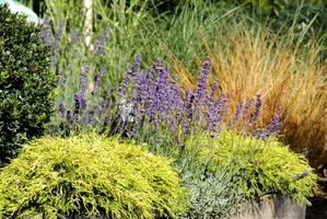 Łączenie iglaków z trawami i bylinami to już standard