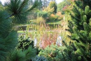 Piękny ogród z iglakami równie pięknie wygląda zimą