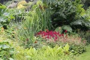 Tawułki w cienistym ogrodzie w zestawieniu z bylinami o dużych lub szablastych liściach