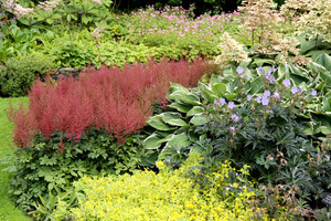 Plama tawułek w ciekawym kolorze w zestawieniu z roślinami o mocnych, kontrastowych barwach. Bardzo dobry przykład do naśladowania