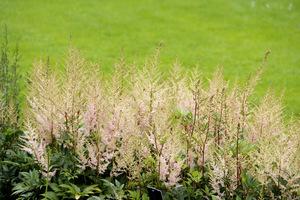 Tutaj tłem jest doskonały trawnik