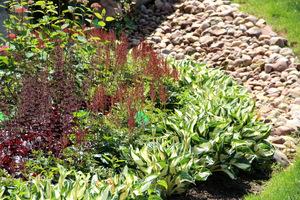 Od lewej żurawki z bardzo ciemnymi liśćmi i kwiatami, następnie tawułki i hosty o liściach z przewagą białego. Znakomite zestawienie