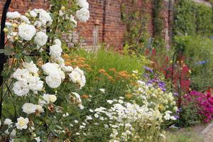 Białe róże na łuku
