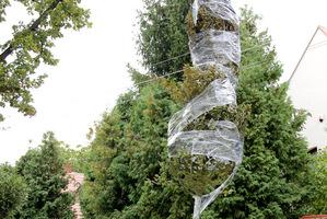 Przygotowujemy sznurek lub coś innego do związania gałęzi - bez tego nie da rady przesadzić drzewa