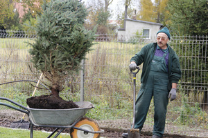 Przewozimy drzewo tak, aby z bryły nie obsypała się ziemia