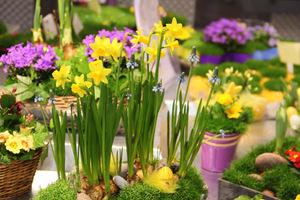Dobrym pomysłem na wiosnę w domu, jest zakup wiosennych roślin cebulowych