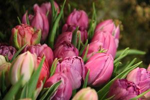 Bukiet tulipanów poprawi humor każdemu