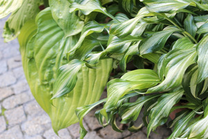 Różna faktura liści