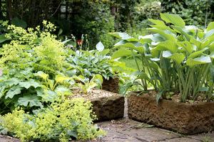 Hosty w kamiennych korytach (Barnsdale Gardens)