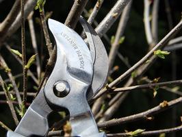 Sekator  dwuręczny Joseph Bentley -  do wiosennego cięcia krzewów