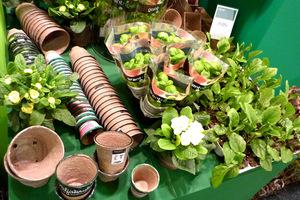 Pojemniki do wysiewów, tzw. wielodoniczki, palety lub doniczki wytłaczane z papieru, torfu oraz tacki do ich postawienia