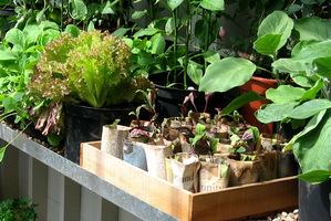 W szklarni łatwo jest zapewnić idealne warunki do wysiewu nasion