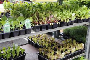 Warzywa w pojedynczych doniczkach łatwo przesadzić potem do gruntu