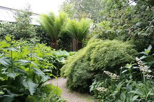 W tej kompozycji niczym dżungla, najbardziej zwracają uwagę paprocie drzewiaste i klon palmowy z liśćmi w kolorze jasnej zieleni