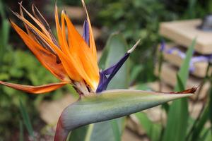 Rośliny egzotyczne nadają się u nas wyłącznie do oranżerii