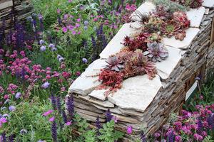 Na suchych murkach dobieramy rośliny sucholubne