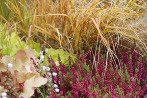 Na suchszych stanowiskach sprawdzą się trawy i wrzosowisko