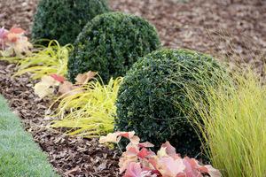 Wybór po kilka sztuk zawsze lepiej się opłaci, bo kilkoma jednakowymi roślinami łatwiej zapełnić ogród i stworzyć kompozycje