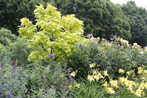 Ogród można radykalnie odmienić i uatrakcyjnić poprzez zastosowanie odpowiedniego koloru lub kształtu