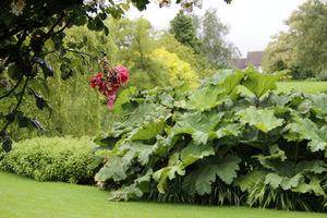 Nowe rośliny przyciągną uwagę nie tylko kolorem ale i swoją mnogością. Dobieramy je na zasadzie kontrastu kolorów lub kształtów liści