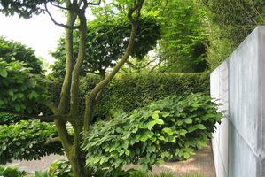 Grab przycięty w formie bonsai niewątpliwie jest tutaj główną ozdobą