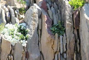 Wydaje się że skały uległy erozji, a rośliny osiedliły się w powstałych spękaniach