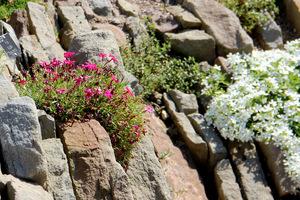 Ogródek szczelinowy to miniatura natury, kawałek alpejskiego krajobrazu