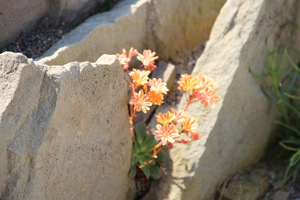 Kamienne płyty umieszczamy pod łagodnym kątem lub prawie pionowo