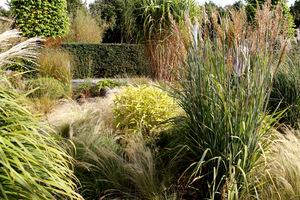 Trawy ozdobne są wspaniałym i wdzięcznym dodatkiem dla podkreślenia urody wszystkiego, co w ogrodzie rośnie