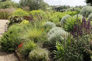 Nachylona skarpa wymaga odpowiedniego dobru roślin